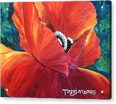 Scarlet Poppy Acrylic Print by Tanja Ware