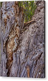 Scarred And Beautiful Acrylic Print by Omaste Witkowski