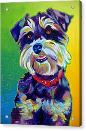 Schnauzer - Charly Acrylic Print by Alicia VanNoy Call