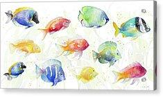 School Of Tropical Fish Acrylic Print by Lanie Loreth
