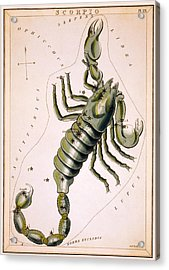 Scorpio Constellation  1825 Acrylic Print by Daniel Hagerman