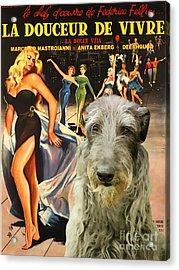 Scottish Deerhound Art - La Dolce Vita Movie Poster Acrylic Print by Sandra Sij