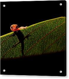 Screen Test Acrylic Print by Stuart Harrison