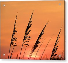 Sea Oat Sunset Acrylic Print by JC Findley