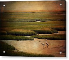 Sea Of Grass Acrylic Print by Lianne Schneider