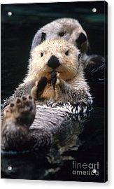 Sea Otter Pup Acrylic Print by Mark Newman