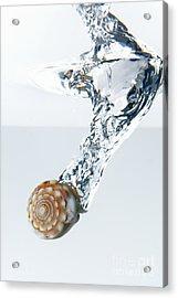 Sea Shell Splashing Underwater Acrylic Print by Sami Sarkis