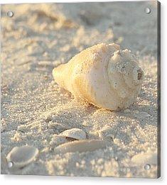 Sea Shells Acrylic Print by Kim Hojnacki