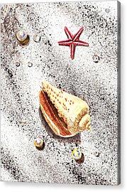 Sea Shells Pearls Water Drops And Seastar  Acrylic Print by Irina Sztukowski