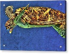 Sea Turtel Acrylic Print by Karen Walzer