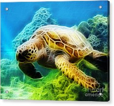 Sea Turtle 1 Acrylic Print by Cheryl Young