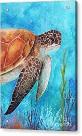 Sea Turtle 1 Acrylic Print by Gabriela Valencia