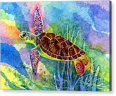 Sea Turtle Acrylic Print by Hailey E Herrera