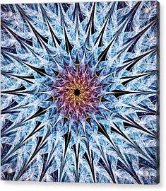 Sea Urchin Acrylic Print by Anastasiya Malakhova
