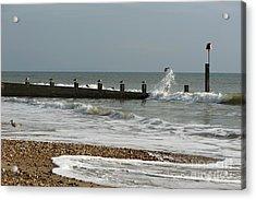 Seagull Groyne Acrylic Print by Anne Gilbert