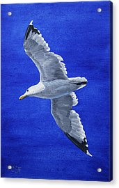 Seagull In Flight Acrylic Print by Crista Forest