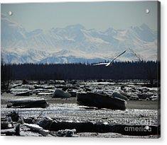 Seagull Acrylic Print by Jennifer Kimberly
