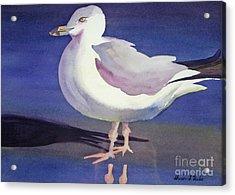 Seagull Acrylic Print by Shirin Shahram Badie