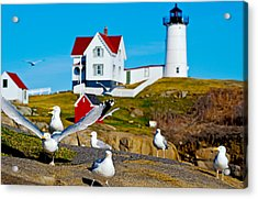 Seagulls At Nubble Lighthouse, Cape Acrylic Print by Panoramic Images