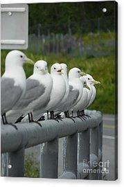 Seagulls Acrylic Print by Jennifer Kimberly