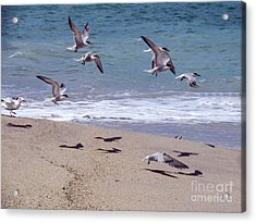 Seagulls On The Wing Acrylic Print by Zina Stromberg