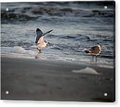 Seagulls Acrylic Print by Sandra Silva