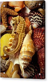 Seahorse Among Sea Shells Acrylic Print by Garry Gay