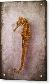 Seahorse Still Life Acrylic Print by Garry Gay