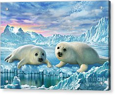 Seal Pups Acrylic Print by Adrian Chesterman