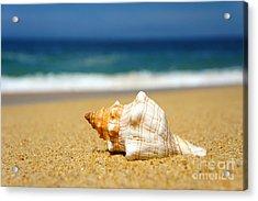 Seashell Acrylic Print by Aged Pixel