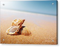 Seashell And Conch Acrylic Print by Carlos Caetano
