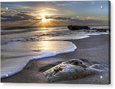 Seashell Acrylic Print by Debra and Dave Vanderlaan