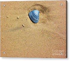 Seashell Acrylic Print by Venus