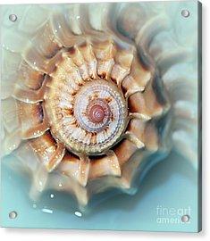 Seashell Wall Art 13 - Spiral Of Harpa Ventricosa Acrylic Print by Kaye Menner