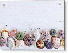 Seashells On Wood Background Acrylic Print by Elena Elisseeva