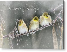 Season's Greetings Acrylic Print by Lori Deiter