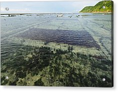 Seaweed Farming, Bali Acrylic Print by Science Photo Library