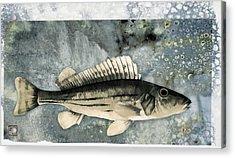 Seaworthy Acrylic Print by Carol Leigh