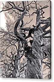 Sedona Arizona Ghost Tree In Black And White Acrylic Print by Gregory Dyer