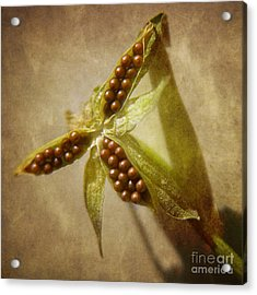 Seeds  Acrylic Print by Peggy J Hughes