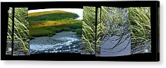 Seeing Seeing Acrylic Print by Susie Capezzone