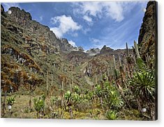 Senecias And Lobelias In The Upper Acrylic Print by Martin Zwick