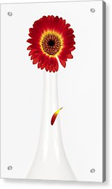 Separation Acrylic Print by Dave Bowman