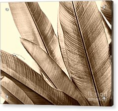 Sepia Leaves Acrylic Print by Cheryl Young