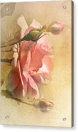 September Rose Acrylic Print by Elaine Manley