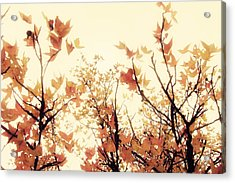 September Song Acrylic Print by Amy Tyler