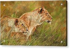 Serengeti Sisters Acrylic Print by David Stribbling