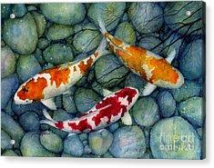 Serenity Koi Acrylic Print by Hailey E Herrera