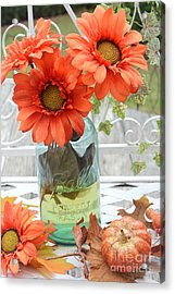 Shabby Chic Autumn Fall Orange Daisy Flowers In Mason Ball Jar - Autumn Fall Flowers Gerber Daisies Acrylic Print by Kathy Fornal