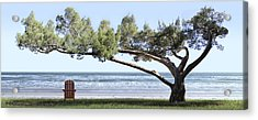 Shade Tree Panoramic Acrylic Print by Mike McGlothlen